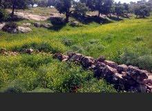 اراضي في ابو الزيغان ، دوقرة ، صروت كافة المساحات
