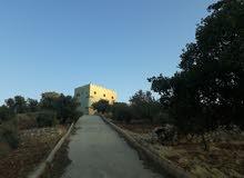 مزرعة للبيع 10 دونمات مشجرة مع بيت
