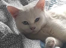 استقبل قطط مؤقت \ واتبنى قطط