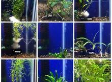 live plant aquarium fish