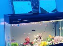 من اكبر انواع الأحواض المنزليه ويستوعب عدد كبير من الأسماك