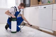 Pest Control Services for Al Ain and Abu Dhabi