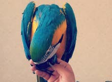 شحن طيور وحيوانات