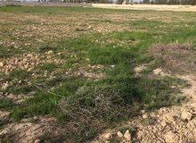 ارض للبيع 16 الف متر عند مطار برج العرب مفتوح لها ملف تقنين