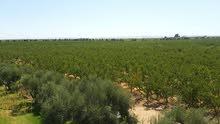 مزرعة 260 هكتار