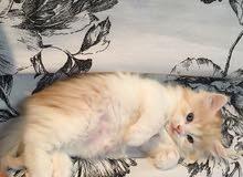 قطط بمختلف الإعمار