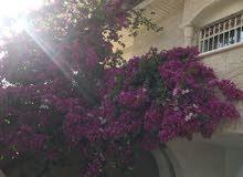 More rooms  Villa for sale in Irbid city Petra Street
