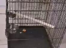 للبيع قفص for sale cage