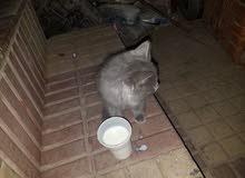 اسمها،سوزي .تأكل جبن.وتشرب حليب ب. 25،000 الف يمني