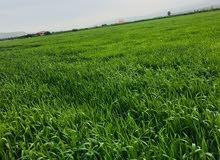 وحدة ارض زراعية في الاغوار الشمالية للبيع