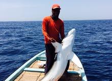 تنظيم رحلات صيد