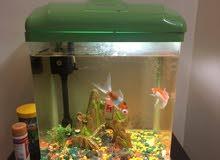 حوض سمك كامل 2 سمكة