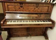 بيانو  p.froluno