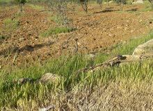 مزرعة 14 دنم  بعد جسر رحاب