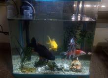 حوض سمك  مع سمك عدد4 للبيع