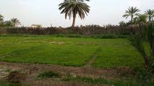 بيع بستان نصف دونم طابو زراعي في كربلاء