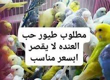مطلب طيور حب عاديه بسعر مناسب