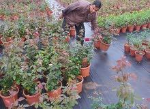 شتلات زريعه وزهور لحديقه خاريجه لزرعه