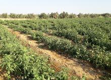 مزرعه 10 فدان عقد تخصيص محضر استلام خالصه الثمن بطاقه حيازه زراعيه لصرف الاسمده