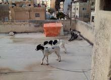 عمان الهاشمي الشمالي