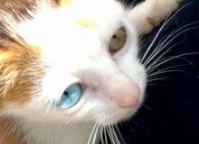 قطة من نوع فريد للبيع