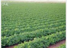 مزرعة للبيع 80فدان قابلين للتجزئه حتي 2 فدان
