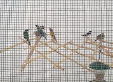 مجموعة طيور للبيع كما في الصوره