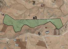 اراضي عمان الجديدة  حوض الحفنة اسعار مناسبة جدا