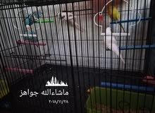طيور النهدي