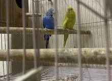طيور هند