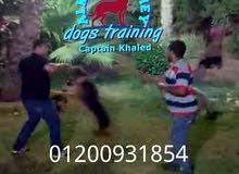 الكينج اكاديمى لتدريب وتأهيل واستضافة الكلاب