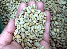 green coffee  beans ready to importing for roustery and company