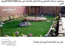 الفلاح ابو هاجر لزراعت الحدائق وزراعة النخيل