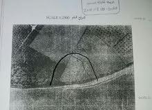 ارض طابو 2150م جحر الديك