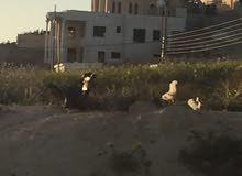 للبيع قطعة ارض في شفا بدران حوض المكمان