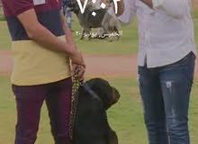 مدرب كلاب من كلية الشرطةk9