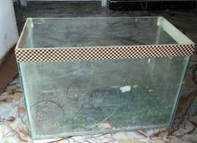 حوض سمك للبيع او مراوس حسب القناعه