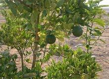مزرعه 500 فدان للبيع مقننه