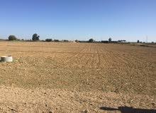 أرض زراعية للبيع بالنوبارية