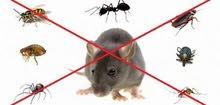 أفضل شركه مكافحة الحشرات pest control عجمان الشارقة دبي