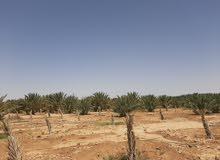 مزرعه للبيع  قرية الامتان وادي الجزل