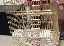 Golden big cage for sale