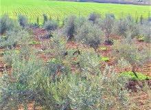 مزرعةللبدل في موبص5000م وبيت150م-شارع الاردن