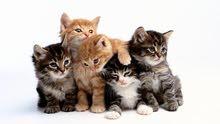 استقبل قطط للتبني كل الأنواع