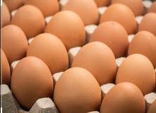 بيض عماني