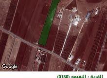 ارض في اربد من اراضي النعيمة منطقة يعمون ( مرج الشيوخ )