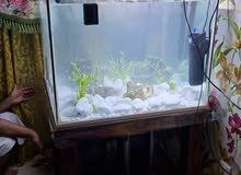 حوض سمك fish tank 400L