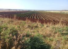 ارض زراعية للبيع في سقيلبية