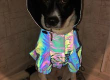 pets designer clothes and supplies