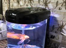 حوض سمك امريكي